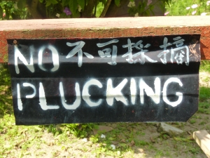 No plucking!