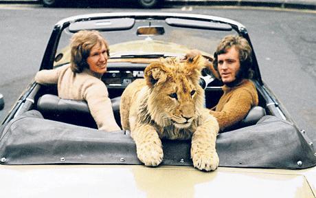 Lion_Cub_Harrods_1371297c