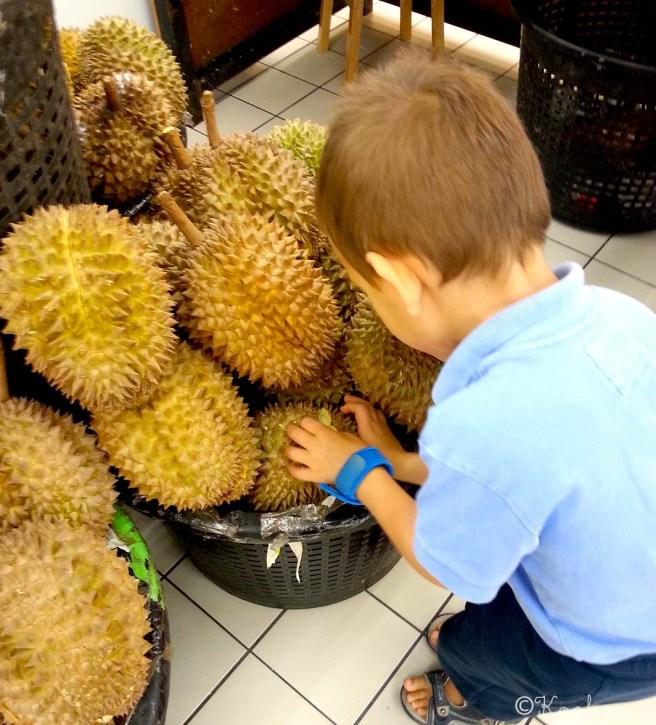 durian canaillou