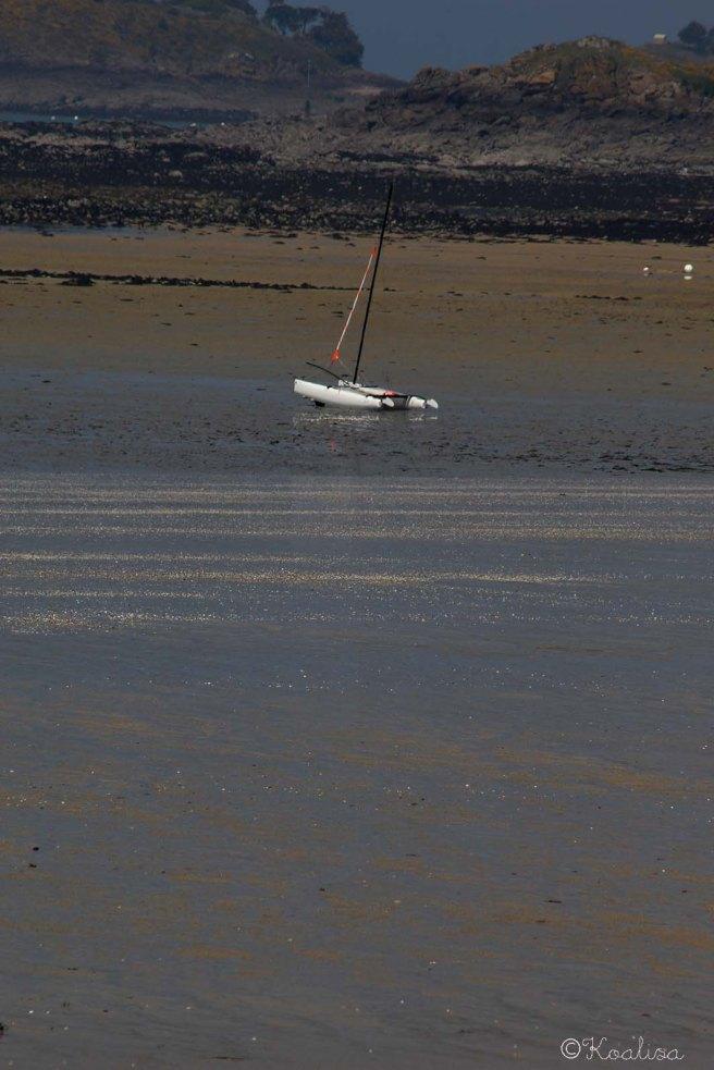 maréee basse11