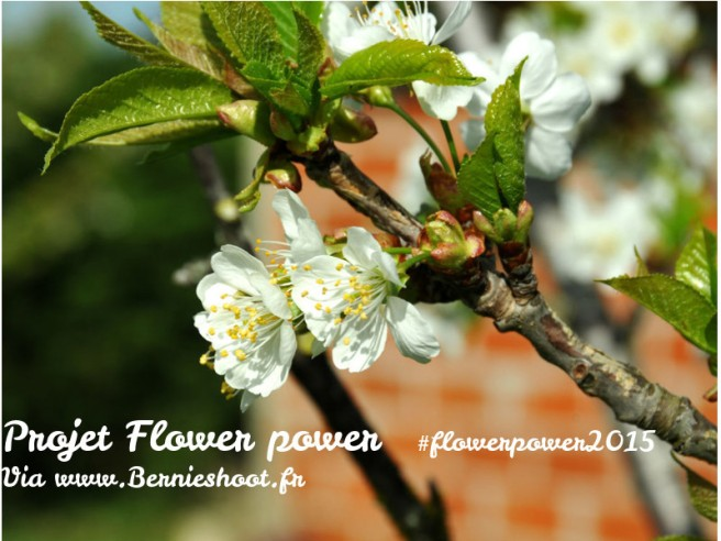 logoflowerpower15