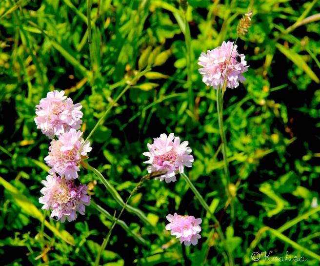 fleurs pléneuf