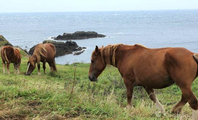 chevaux5